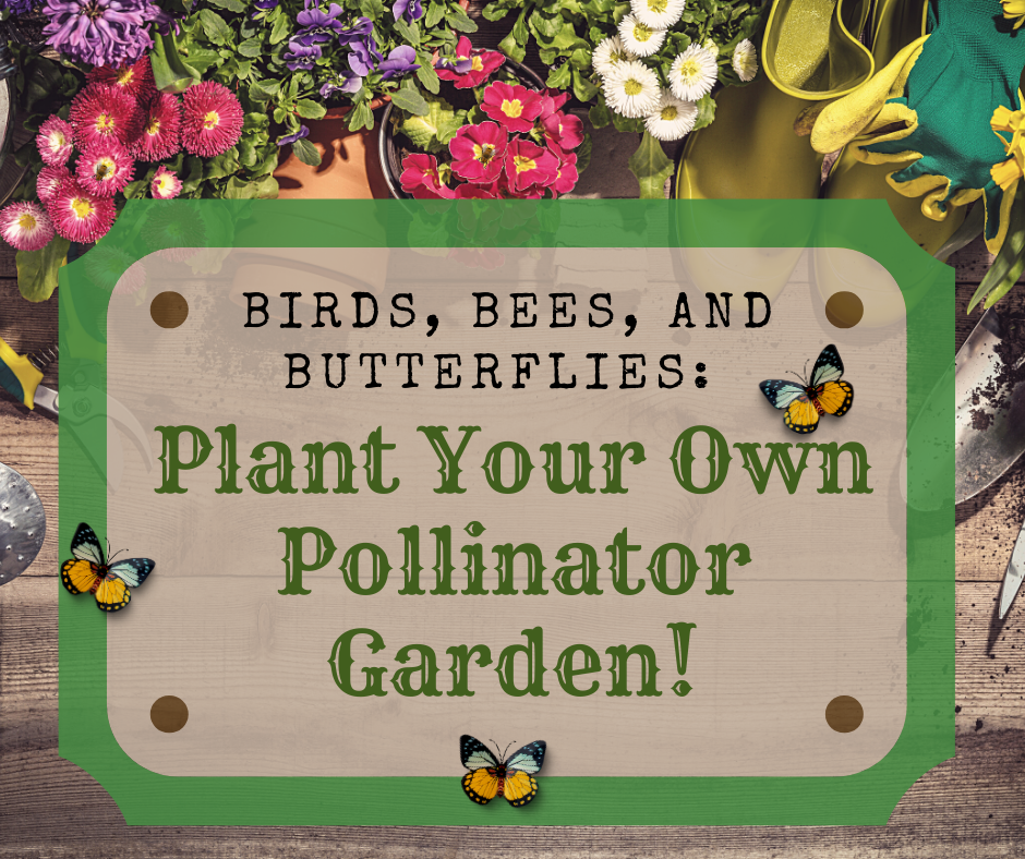 Birds, Bees & Pollinators